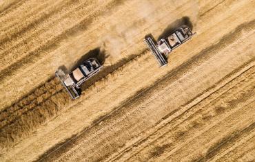 الصين تطور سلالة جديدة من الأرز تقاوم التلوث بالمعادن الثقيلة